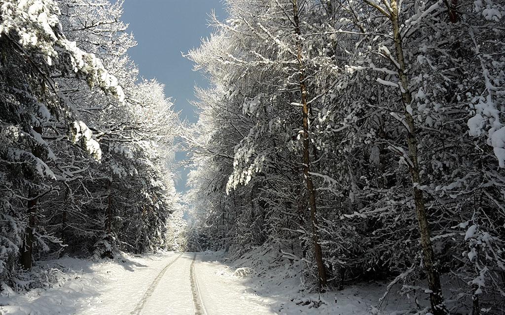 Weilbach Natur Wald im Winter