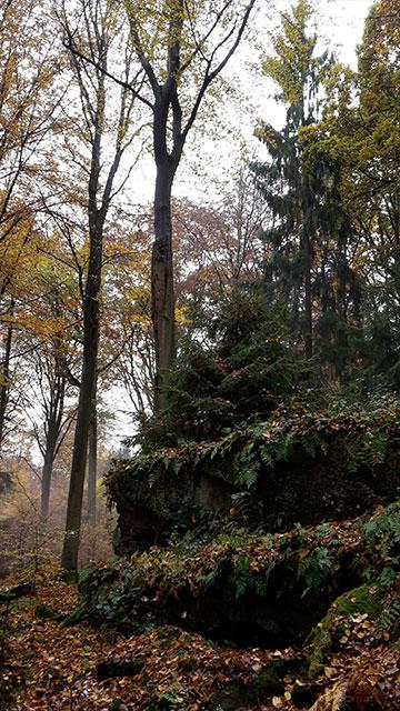 Weilbach Natur Wald Landschaft