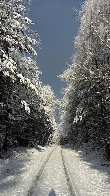 Weilbach Natur Winterlandschaft