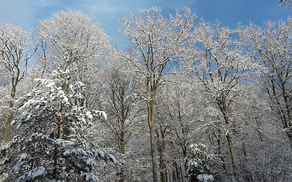 Weilbach Natur Winterwald
