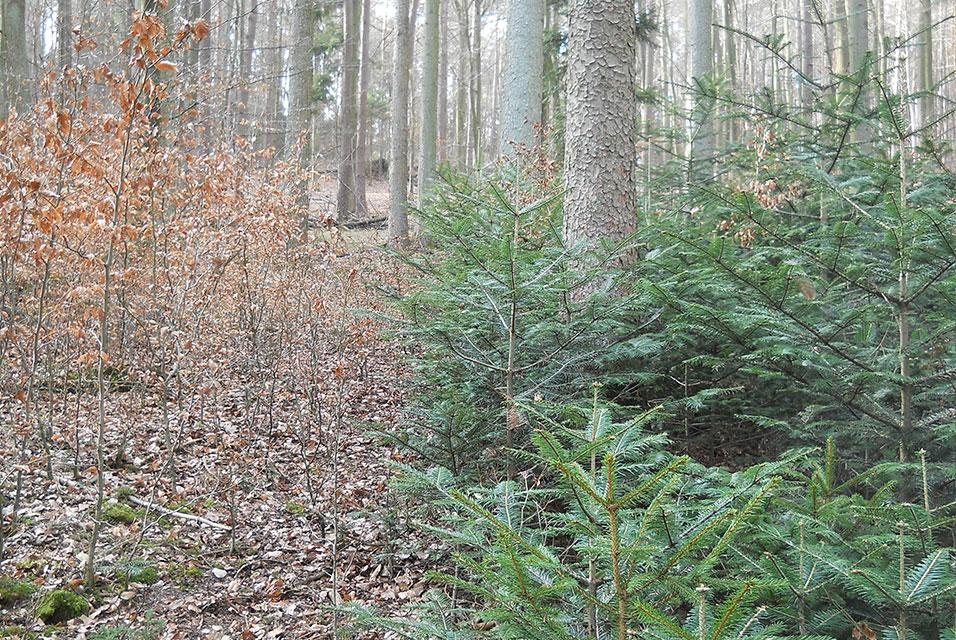 Weilbacher Wald Natur in Weilbach